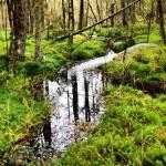 Trollskog i Hindås